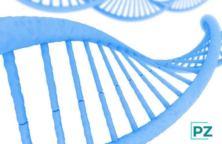 ¿Cómo afecta la genética en el peso?