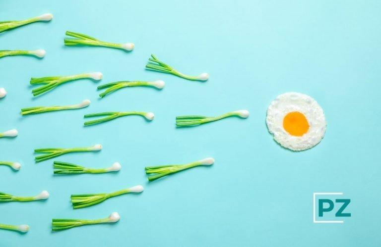 Relación entre sobrepeso y fertilidad
